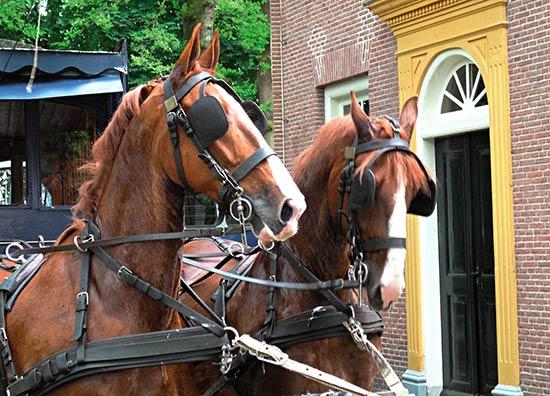 Paardentram Veenhuizen